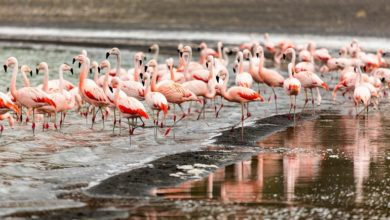 Photo of Flamingos Can Be Picky About Company