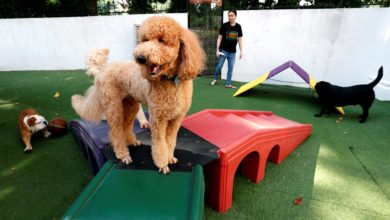 Photo of COVID-19: Basic pet grooming services to resume on 2 June