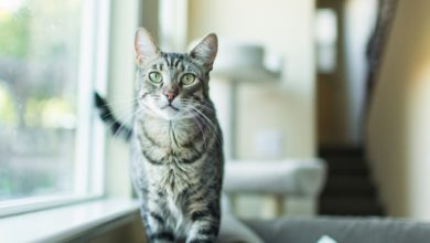 Photo of 15 Ways To Keep Your Indoor Cat Happy And Occupied