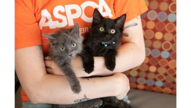Photo of ASPCA Launches National Adoption Weekend Campaign from June 5 -19 Crisis