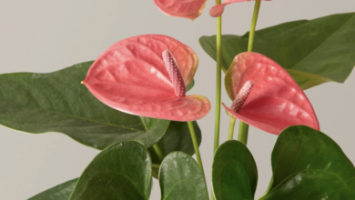 Photo of Beautify your space with these indoor plants you can buy online