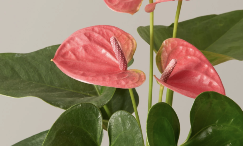 Beautify your space with these indoor plants you can buy online