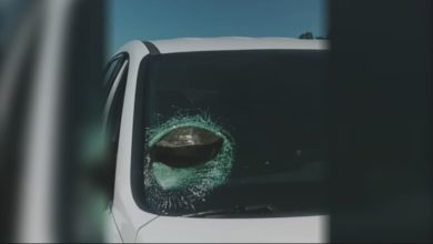 Photo of Flying turtle smashes through Georgia driver's windshield