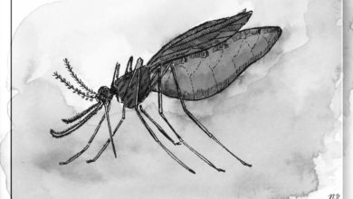 Photo of How mosquitoes have shaped human history, time out for a different predator