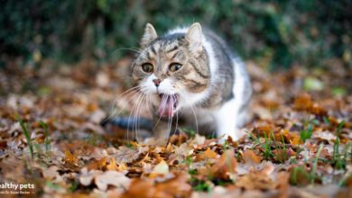 Photo of Wild Cats Don't Routinely Vomit, Neither Should Yours