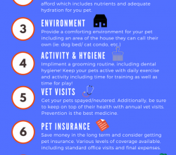 Photo of tips to keep your pets happy, healthy …
