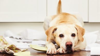 Photo of 5 Important Things to Consider Before Getting A Pet