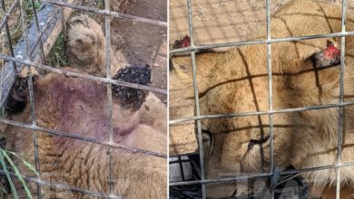 Photo of 'Tiger King' Zoo Accused of Animal Neglect, Massive Fly Problem
