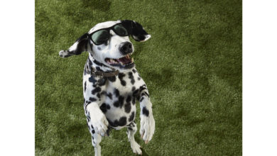Photo of Petco Shares Tips for COVID-19 Safe Summer Fun with Pets