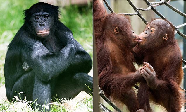 Magnificent animals at famous Twycross Zoo face CULLING