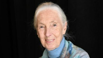 Photo of Jane Goodall warns coronavirus was 'inevitable' as humans 'disrespect nature'