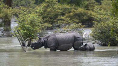 Photo of Floods Put Residents And Vulnerable Wildlife At Risk In India's Assam