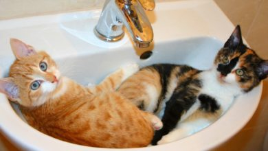 Photo of Why Do Cats Like to Chill Out in Sinks?