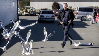 Photo of Misbehaving red-billed gulls not welcome in Oamaru's CBD