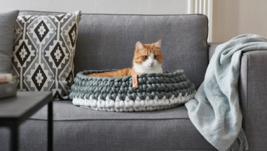 Photo of Essentials for New Pet Owners by a New Pet Owner