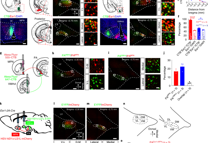 Posterior amygdala regulates sexual and aggressive behaviors in male mice