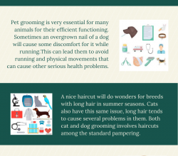 Photo of Pet Grooming is more Than a Luxury