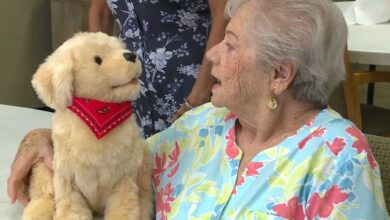 Photo of Seniors receive robot pets for quarantine loneliness…
