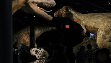 Photo of Dinosaurs got cancer too, say scientists