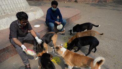 Photo of Dog lovers outraged over plans to relocate Dhaka strays