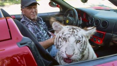 Photo of 'Tiger King' zookeeper Jeff Lowe willfully violated animal welfare regulations, feds say