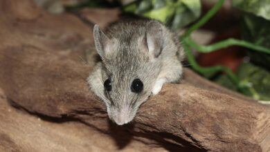 Photo of Good animal welfare helps lab mice overcome bad things in life