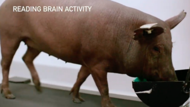 Photo of Elon Musk parades about Neuralink-wired pig, and this is apparently the future