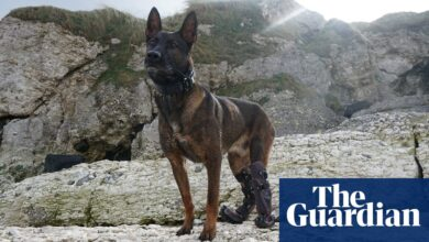Photo of Military dog Kuno to receive UK's highest honour for animals