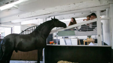 Photo of Horse hotel lets tourists sleep in a stable for $250 a night