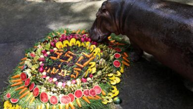 Photo of Thailand's oldest hippo celebrates birthday with fruit and song