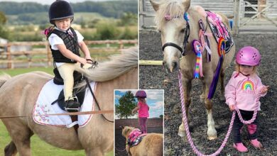 Photo of Fearless rider, two, has already won horse riding competitions
