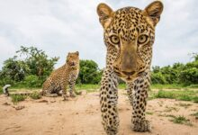 Photo of 20 wildlife photos that show how beautiful the animal kingdom is
