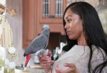 Photo of T'Challa's Real Housewife Behavior, Explained by a Parrot Expert