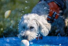 Photo of Troy's Splash Bash gives dogs much-needed time to socialize safely amid COVID-19