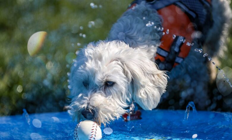 Troy's Splash Bash gives dogs much-needed time to socialize safely amid COVID-19