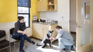 Photo of Inside the plan to revolutionize animal shelters