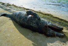 Photo of Here's What Really Happens When Whales Get Beached