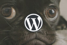 Photo of Best Animal & Pet Care WordPress Themes 2020 (Free & Premium)