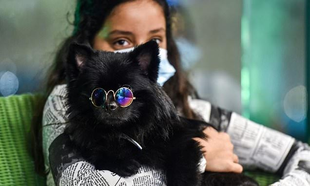 Saudi Arabia opens first cafe for dog owners