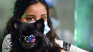 Photo of Pictures: In Changing Saudi Arabia, First Dog Cafe Delights Pet Lovers