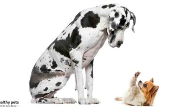 Photo of The Surprising Link Between Dog Size and Behavior